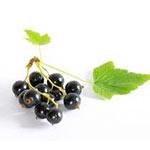 Mustaherukkasiemenöljy luonnonkosmetiikassa on vahva antioksidantti, joka antaa tehokasta suojaa vapaita radikaaleja vastaan ehkäisten ennenaikaista ikääntymistä.