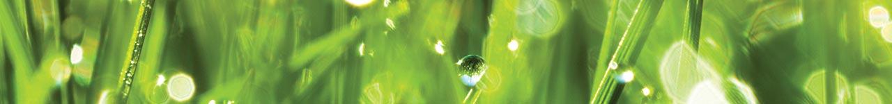 Aubrey luonnonkosmetiikan verkkokaupassa tuotteet vain luonnonmukaisista ainesosista